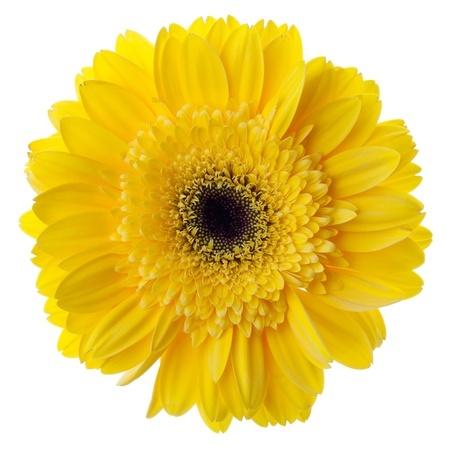 blomst som symbol for tangodanser
