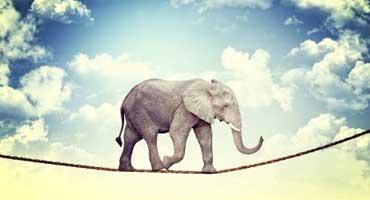 en elefant kom marsjerende